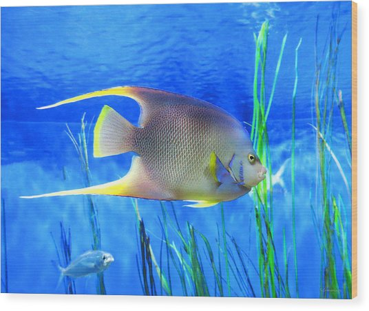 Into Blue - Tropical Fish By Sharon Cummings Wood Print