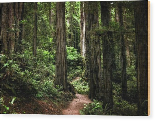 Into The Magical Forest Wood Print