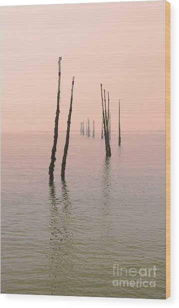Into The Pink Sunset... Wood Print