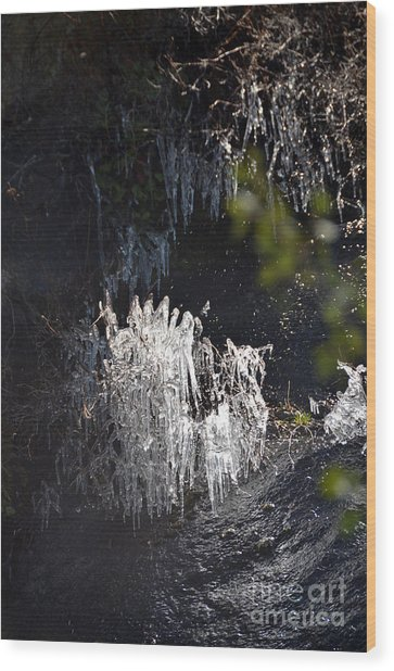 Intriguing Icicles In Yosemite Wood Print