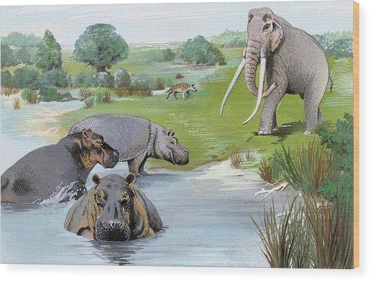 Ipswichian Interglacial Mammals Wood Print by Natural History Museum, London/science Photo Library
