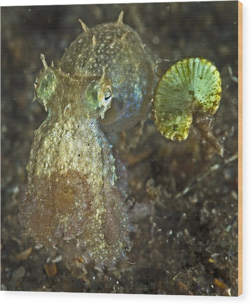 Iridescent Baby Octopus Wood Print