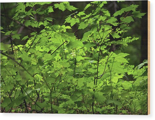 Wood Print featuring the photograph Iridescent Green by Trever Miller