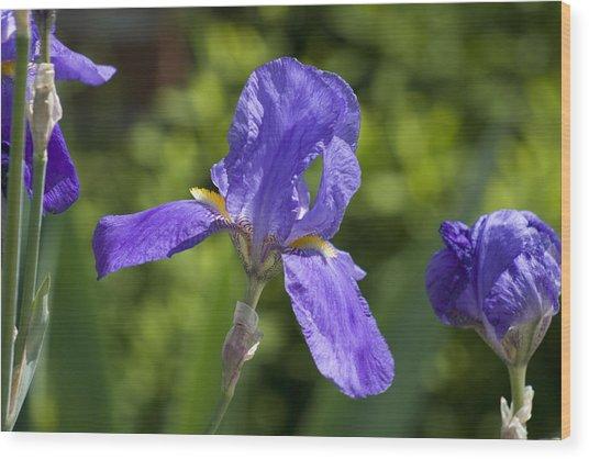 Iris 4 Wood Print