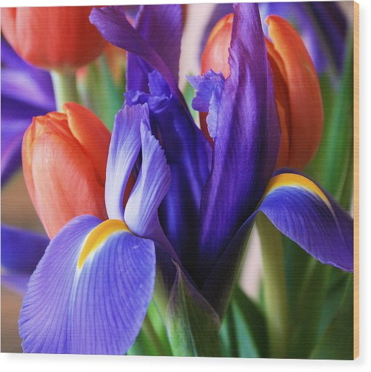 Iris And Tulips Wood Print