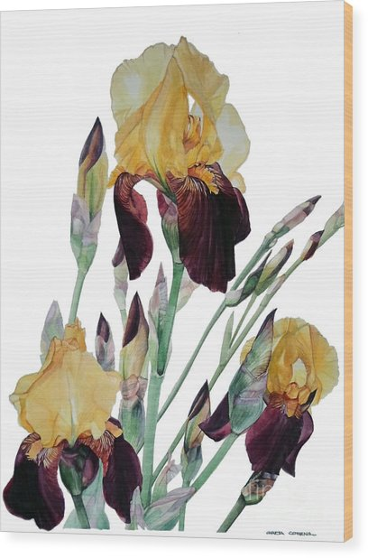 Watercolor Of Tall Bearded Iris In Yellow And Maroon I Call Iris Beethoven Wood Print