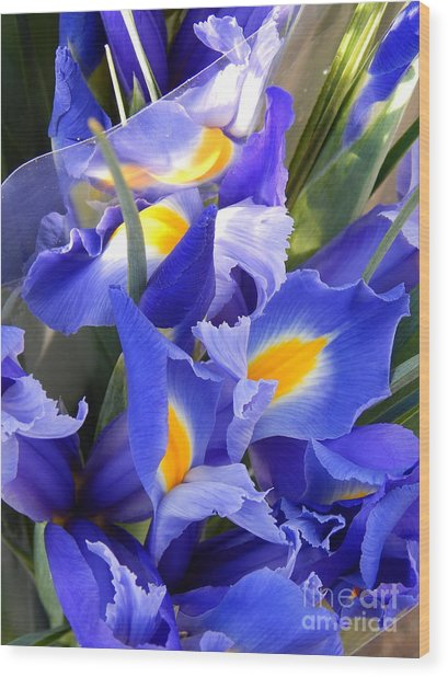 Iris Blues In New Orleans Louisiana Wood Print