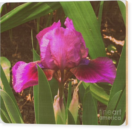 Iris Wood Print by Christy Beal