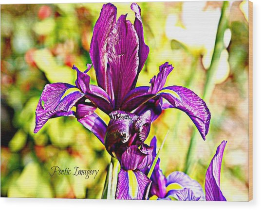Iris Wood Print by Debbie Sikes