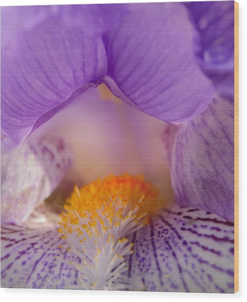 Iris Detail Wood Print