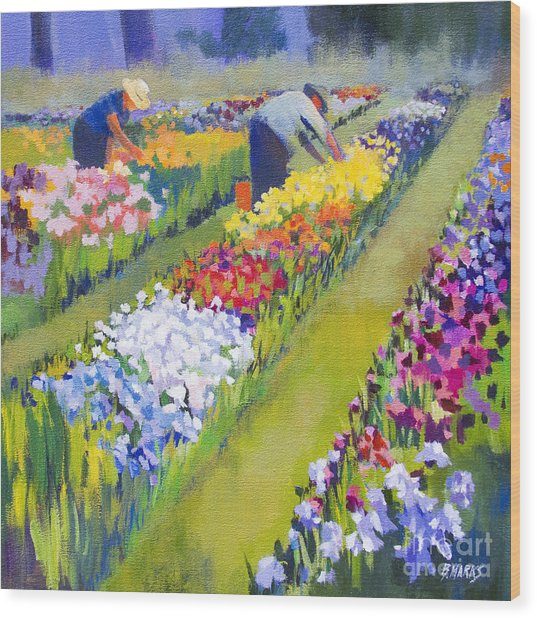 Iris Farm Wood Print by Bernard Marks