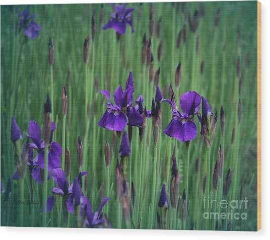 Iris Field Wood Print by Yumi Johnson