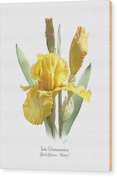 Iris Germanica Gold Galore Wood Print