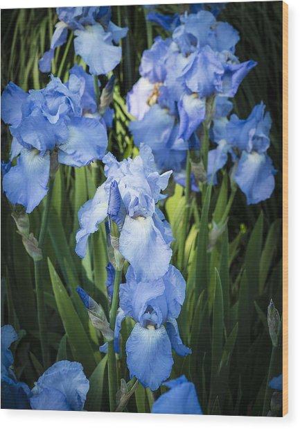 Iris 'jane Phillips' Wood Print by Gerry Walden