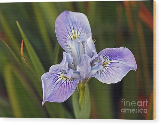 Wood Print featuring the photograph Iris by Kate Brown