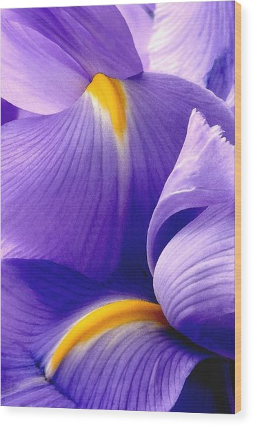 Iris Vi Wood Print
