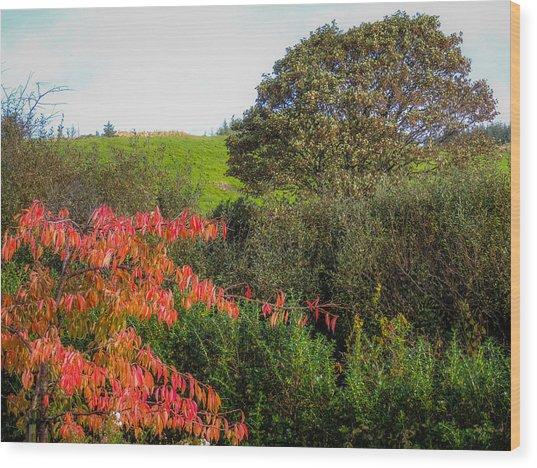 Irish Autumn Countryside Wood Print