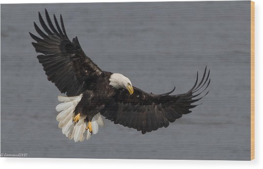 Iron Eagle  Wood Print by Glenn Lawrence