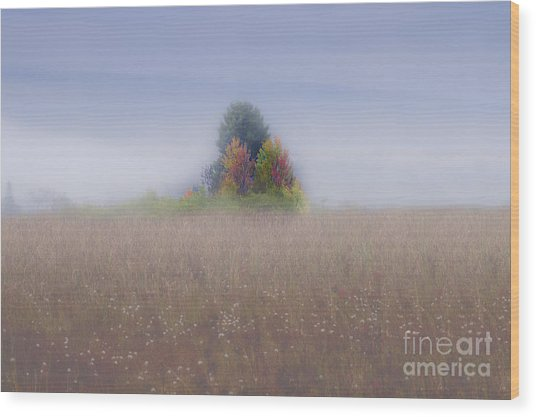 Island Of Color In Sea Of Fog Wood Print