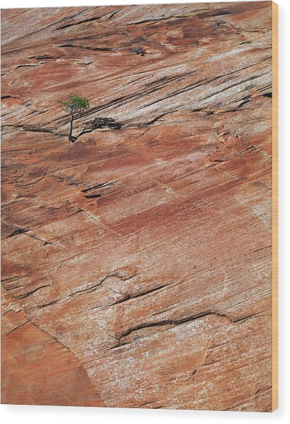 Isolated View Wood Print