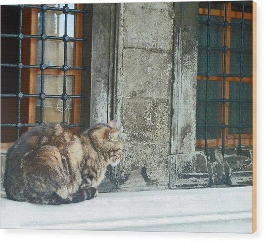 Istanbul Cat Wood Print