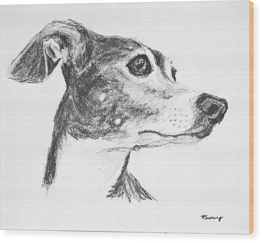 Italian Greyhound Sketch In Profile Wood Print