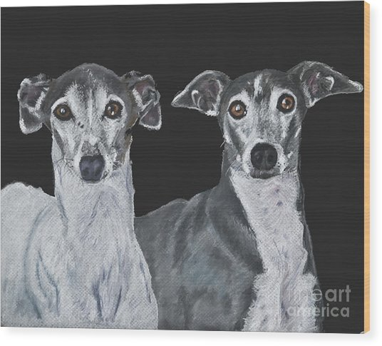 Italian Greyhounds Portrait Over Black Wood Print