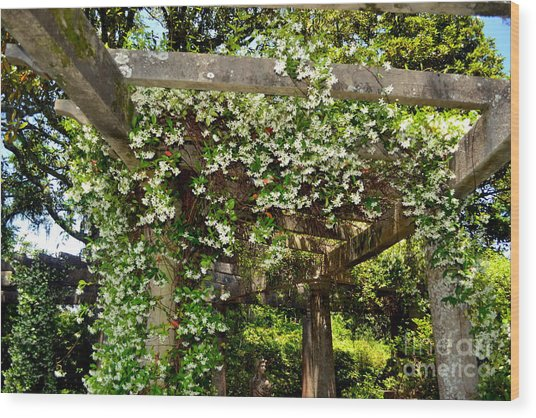 Italian Pergola Flowers  Wood Print