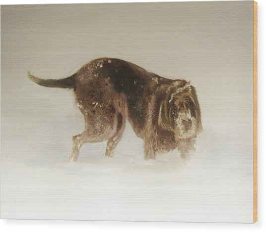 Italian Spinone In The Snow Wood Print