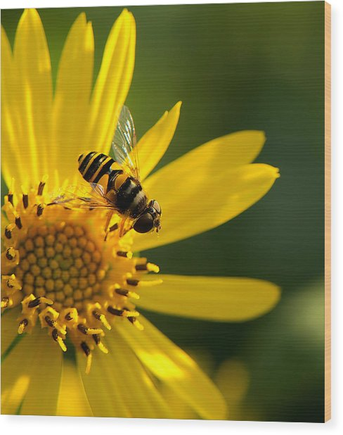 Its A Bees Life IIi Wood Print by Kathi Isserman