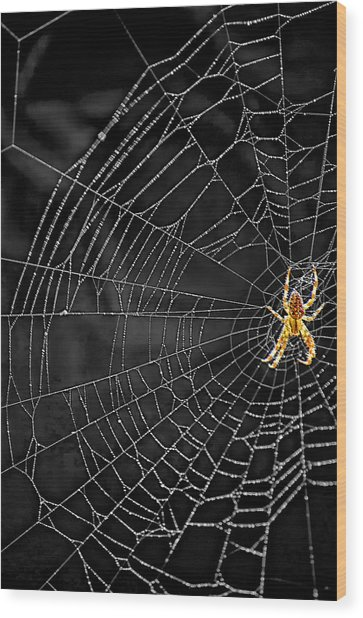 Itsy Bitsy Spider My Ass 3 Wood Print