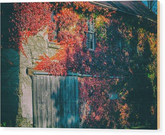 Ivy Covered Barn Wood Print