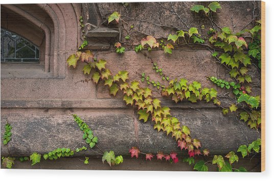 Ivy League Wood Print