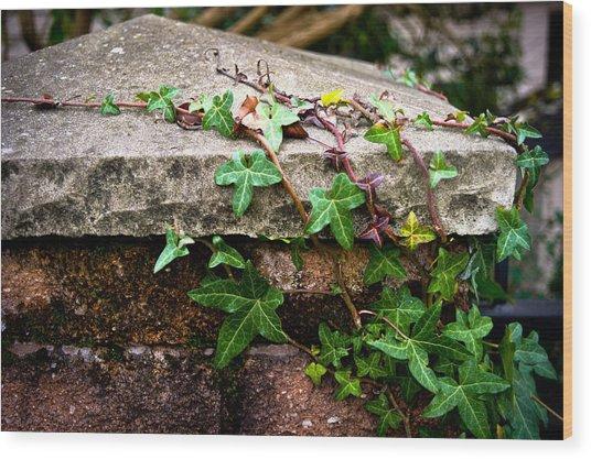 Ivy On Stone Wood Print