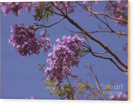 Jacaranda Blooms Wood Print