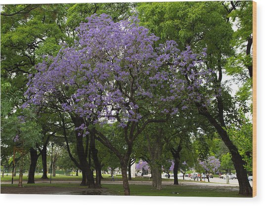 Jacaranda In The Park Wood Print