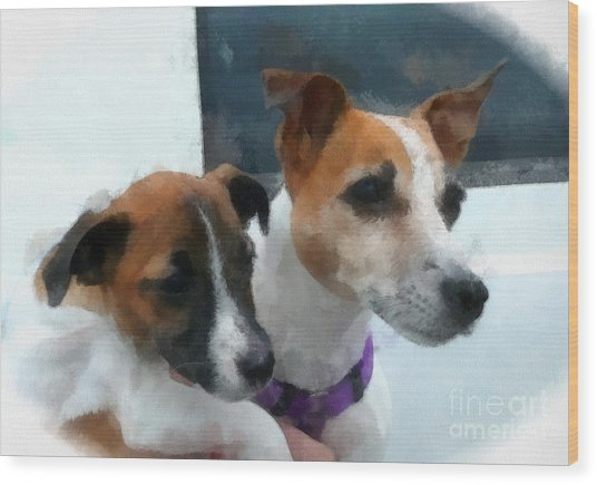 Jack Russells Wood Print by Betsy Cotton