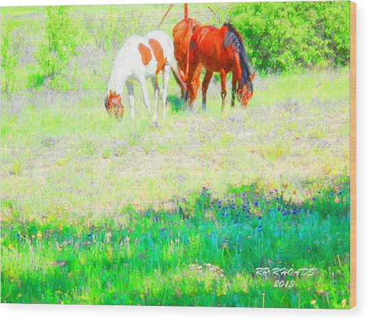 Jack Smokey And Camelot Texas Spring A Wood Print