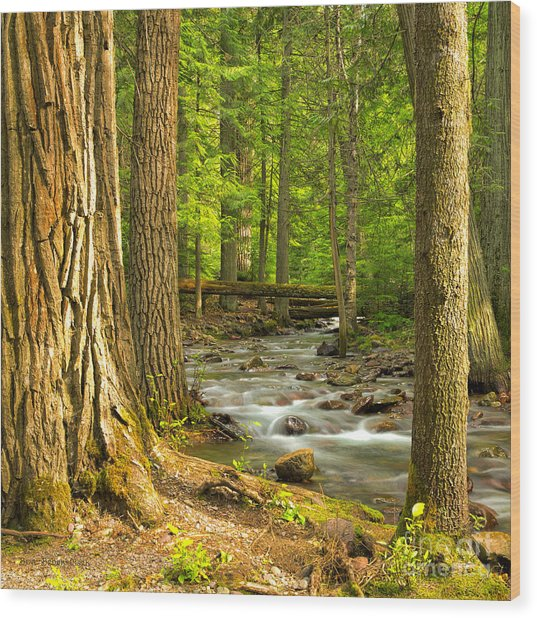 Jackson Creek Wood Print
