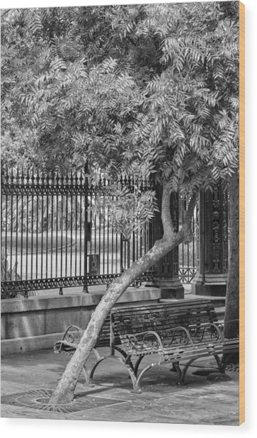 Jackson Square Bench And Tree Wood Print