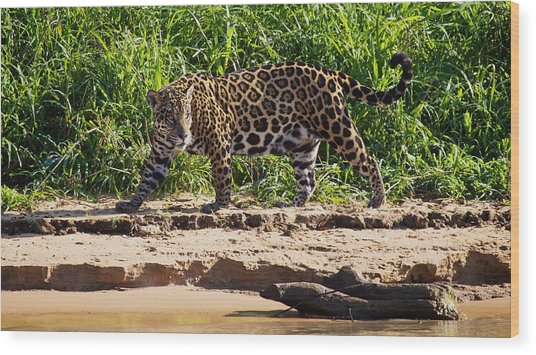 Jaguar River Walk Wood Print