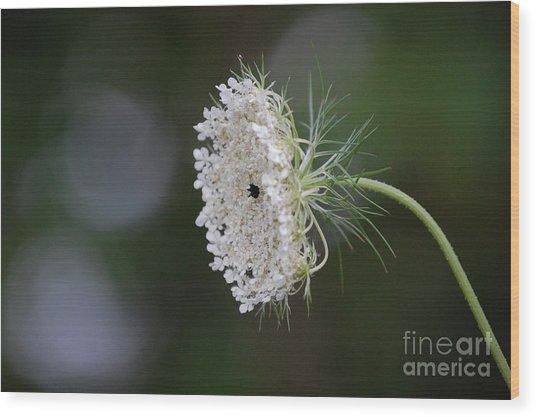 jammer Garden Lace 2 Wood Print