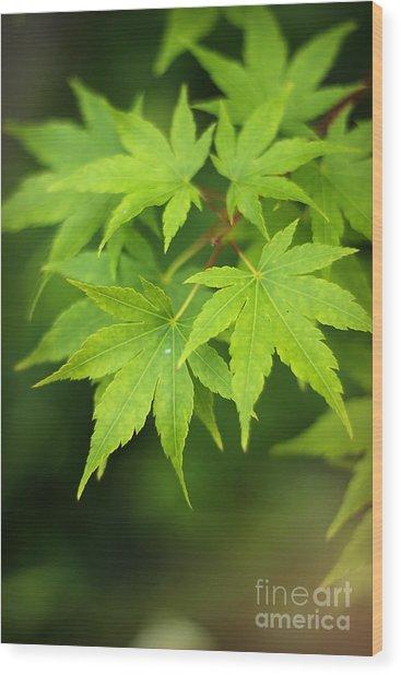 Japanese Elm Wood Print