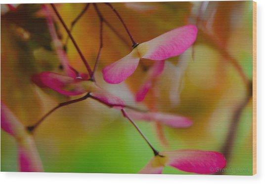 Japanese Maple Seedling Wood Print