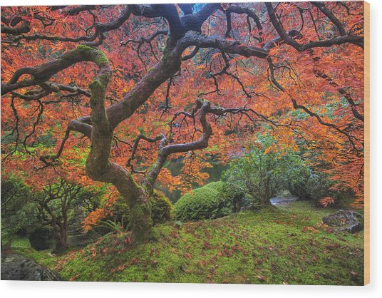 Japanese Maple Tree Wood Print
