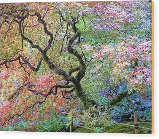 Japanese Maple Wood Print