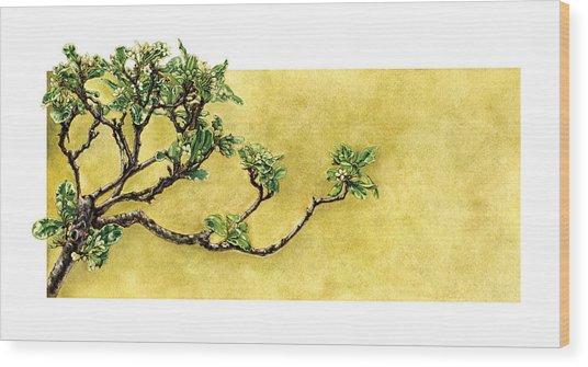 Japanese Pittosporum At The Hakone Gardens Wood Print by Suzannah Alexander
