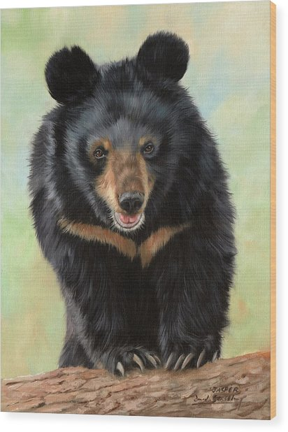 Jasper Moon Bear - In Support Of Animals Asia Wood Print