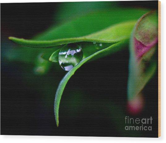 Jasper - Rain Drop Plant Wood Print