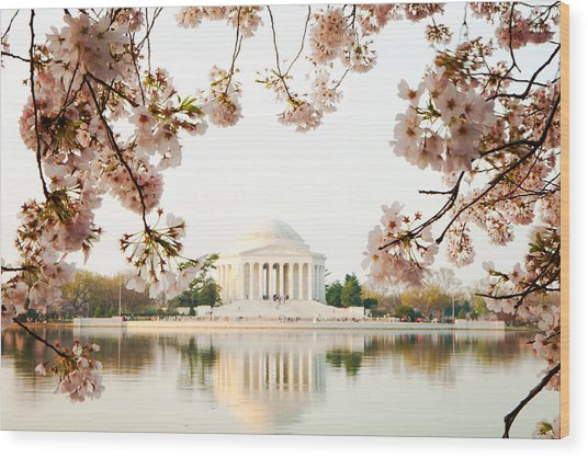Jefferson Memorial With Reflection And Cherry Blossoms Wood Print